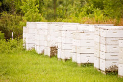 Bee-hives Stock Photos