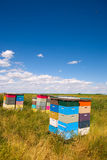 Bee hives royalty free stock image