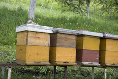 Bee hives. Old bee hives on lawn Stock Images