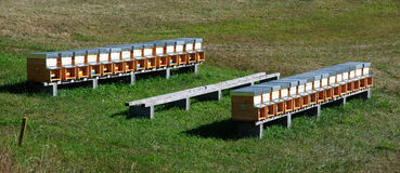 Bee hives (apiary) in a field Royalty Free Stock Photography