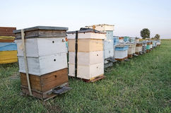Bee hives in the apiary in the field Royalty Free Stock Photo