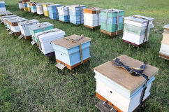 Bee hives in the apiary in the field Royalty Free Stock Photography