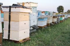 Bee hives in the apiary in the field Royalty Free Stock Photos