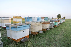 Bee hives in the apiary in the field Stock Image