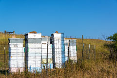 Bee Hives in a Bee Yard. Or apiary, near Sheridan, Wyoming Royalty Free Stock Photo