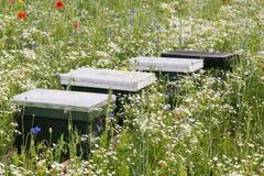 Bee hives between blooming wildflowers Stock Photo