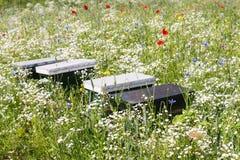 Bee hives between blooming wildflowers Stock Photos