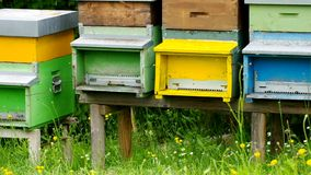 Bee hives stock footage