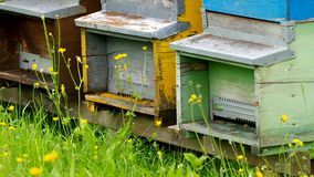 Bee hives stock video footage