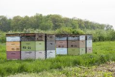 Bee hives Stock Image