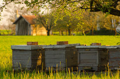 Bee hives on countryside Stock Image