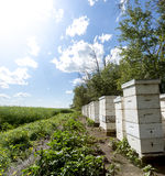 Bee hives on the edge of a farm field Royalty Free Stock Photos