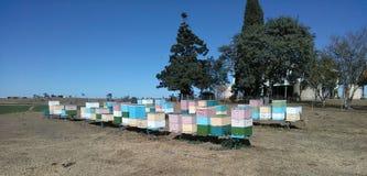 Bee hives. Farm life country living Stock Photos