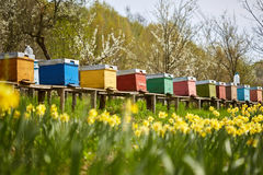 Bee hives in the field and orchard Stock Photos