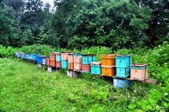 Bee hives in a forest farm Guamka Royalty Free Stock Photos