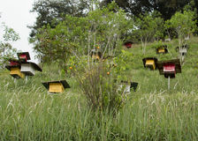 Bee hives in the garden Stock Photo