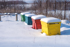 Bee hives hibernating. Bee hives in the wintertime covered by snow Stock Photos