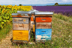 Bee hives on lavender fields, near Valensole, Provence. Royalty Free Stock Image