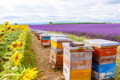Bee hives on lavender fields, near Valensole, Provence. Stock Images