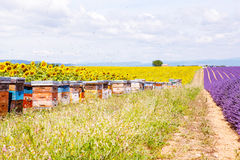Bee hives on lavender fields, near Valensole, Provence. Stock Photo