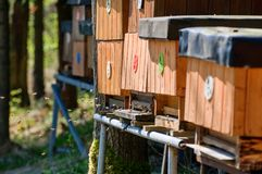 Bee hives. A long line of wood bee hives at the beginning of spring royalty free stock photo