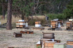 Bee hives made with recycled materials Stock Image