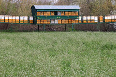 Bee hives on meadow Royalty Free Stock Images