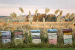 Bee hives Stock Photos
