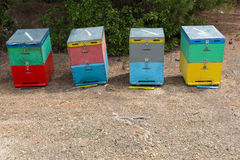 Bee Hives Next to a Pine Forest in Summer. Honey Beehives in the Meadow. Row of Colorful Bee Hives with Trees in the Backgr. Bee Hives Next to a Pine Forest in Stock Image