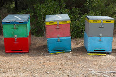 Bee Hives Next to a Pine Forest in Summer. Honey Beehives in the Meadow. Row of Colorful Bee Hives with Trees in the Backgr. Bee Hives Next to a Pine Forest in Stock Images