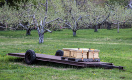 Bee hives in an orchard Stock Photography