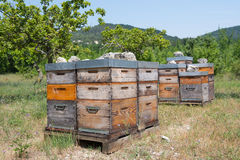 Bee hives in orchard Stock Photography