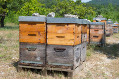 Bee hives in orchard Stock Photo