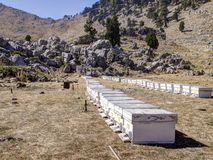 Bee hives on plateau of Mount Tahtali, Turkey Royalty Free Stock Images