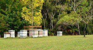 Bee Hives. A row of bee hives on a farm Stock Photos