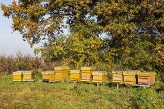 Bee hives Royalty Free Stock Photo