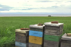 Bee Hives by the Sea. Bees buzz around hives on the coast of Prince Edward Island, Canada stock video