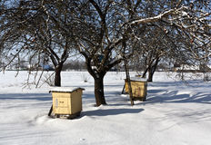 Bee hives in snowy garden. Stock Photos