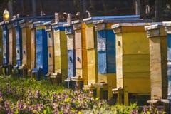 Bee hives on spring garden Stock Photos