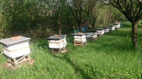 Bee hives. In spring time Royalty Free Stock Photography