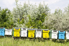Bee hives in summer Stock Photos