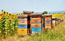 Bee hives. Royalty Free Stock Photo