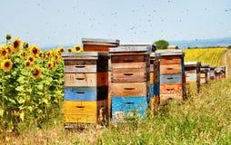 Bee hives. Royalty Free Stock Photo