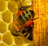 Bee hives are taken to pollen. Royalty Free Stock Photography