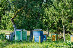 Bee hives under fruit trees in garden. Beekeeping Stock Images