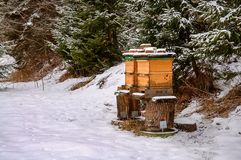 Bee hives in winter Stock Photography