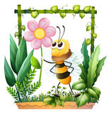 A bee holding a pink flower Stock Photography