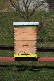 Bee home Stock Image