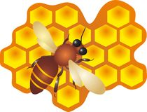 Bee And Honey. A bee filling the hive cells with fresh honey. illustration vector illustration