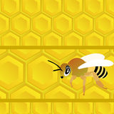 Bee and honey. Honeycomb with honey and bee. Bee on a yellow abstract background Stock Photos